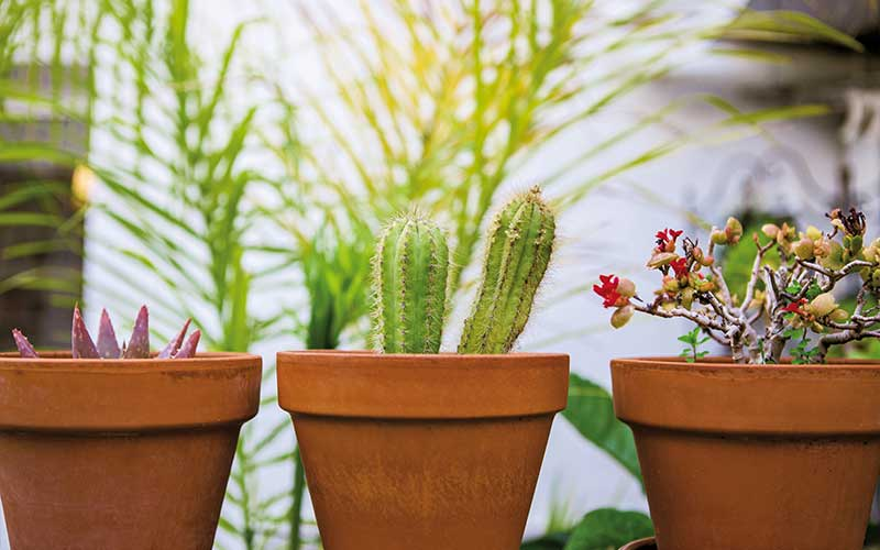 How to Care for Succulents in Containers