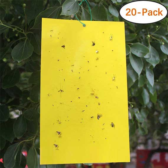 Trapro 20-Pack Dual-Sided Yellow Sticky Traps