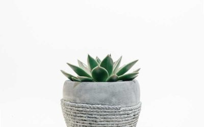 What Are The Mistakes To Avoid When Caring For A Succulent?