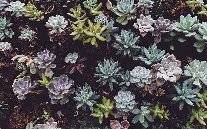 Aesthetic of the succulents