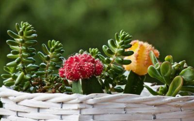 7 Charming Flowering Succulents to Grow in Your Home