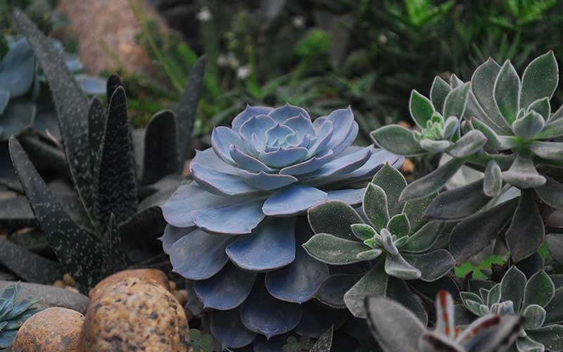 A Beginner's Guide to Watering Your Succulents