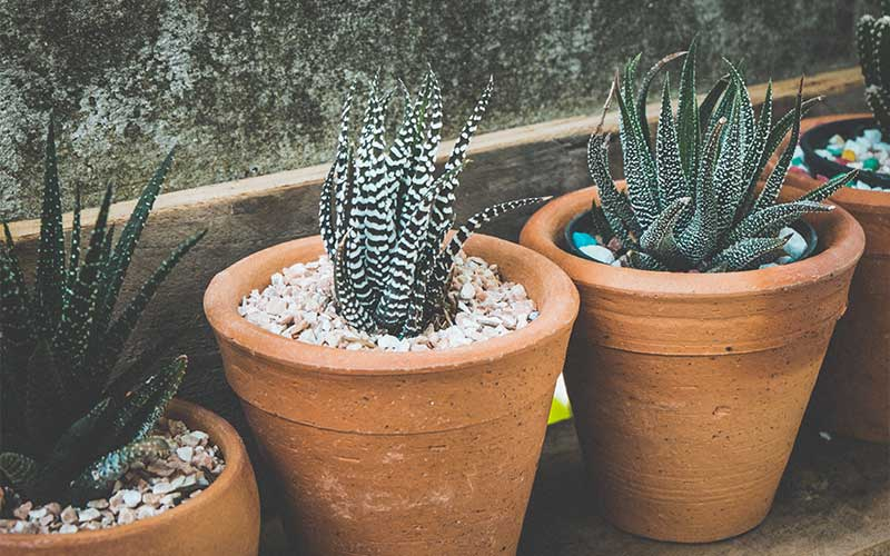 A Guide to Making the Perfect Succulent Soil Mix