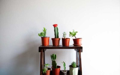 A Guide to Succulent Types that Improve Air Quality