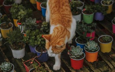 Animals That Love to Eat Succulents