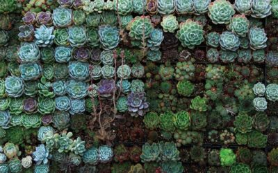 Common Mistakes to Avoid When Propagating Succulents