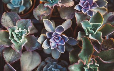 Common Succulent Problems You May Encounter and How to Solve These