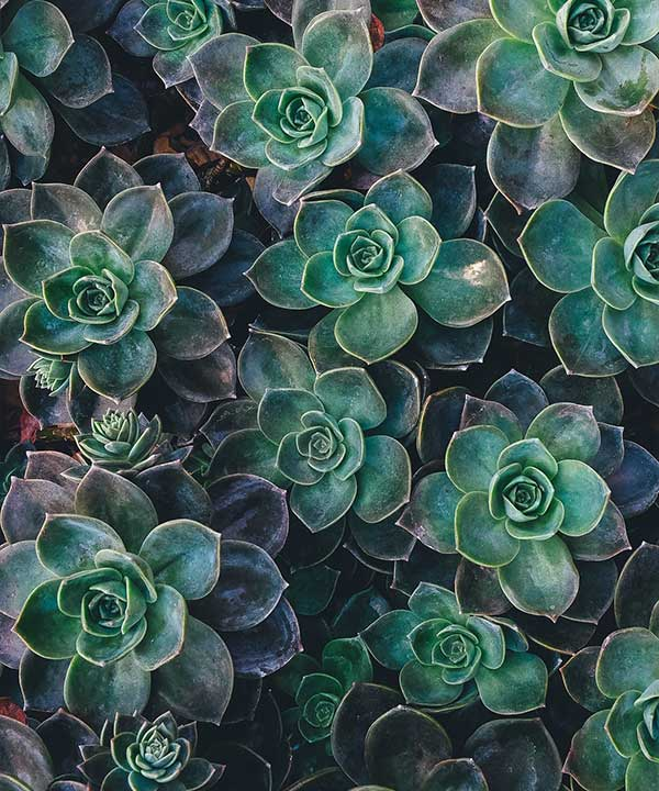 How to Stop Succulents From Spreading