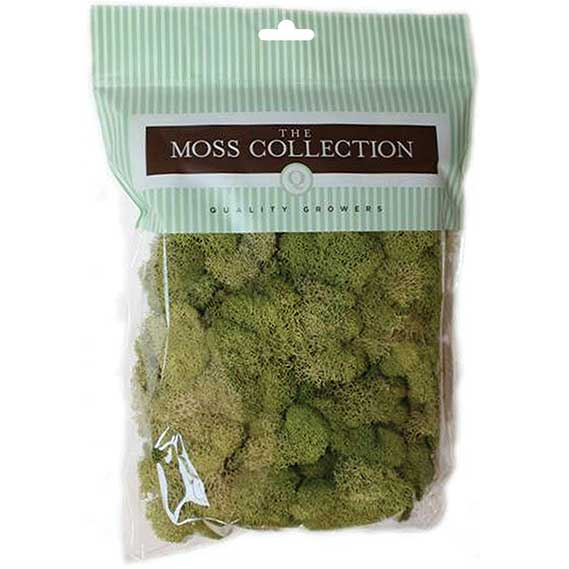 Quality Growers QG2060 Preserved Reindeer Moss
