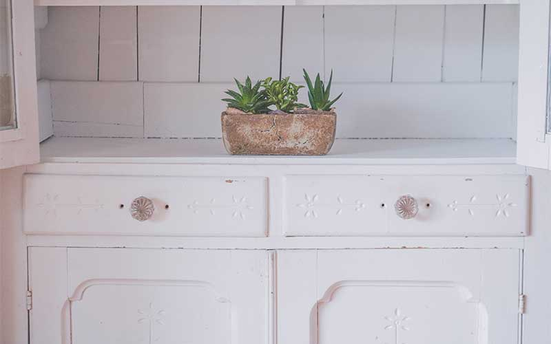Discover some of the most popular types of succulents including Aloe Vera, Snake Plant, etc. Learn some information and tips on how to grow and care for them.