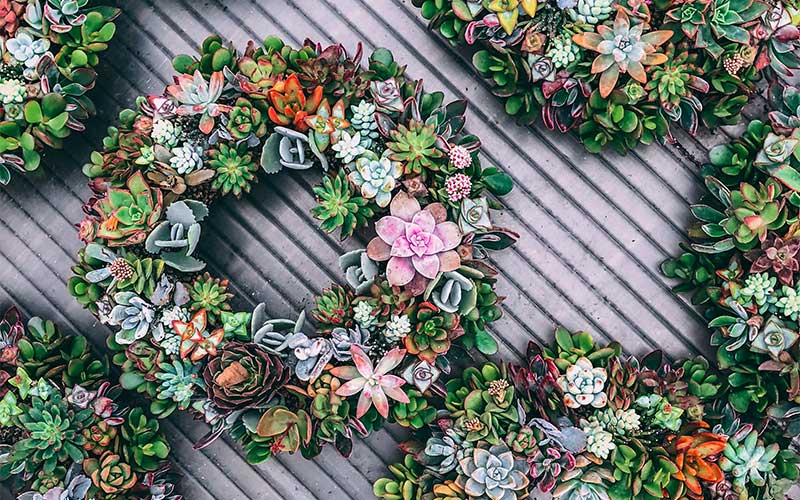 Steps in Making Your Succulent Wreath