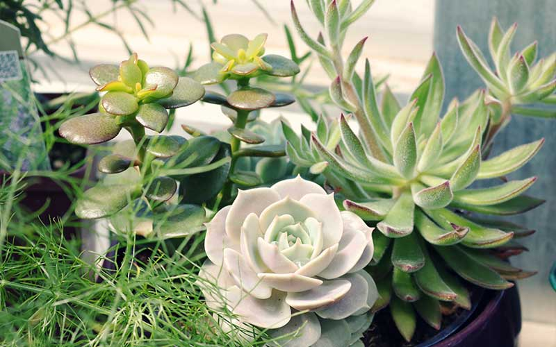 The Meaning Behind Every Succulent Arrangemen