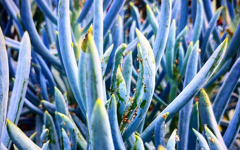 What Are the Best Succulents to Grow in Winter?