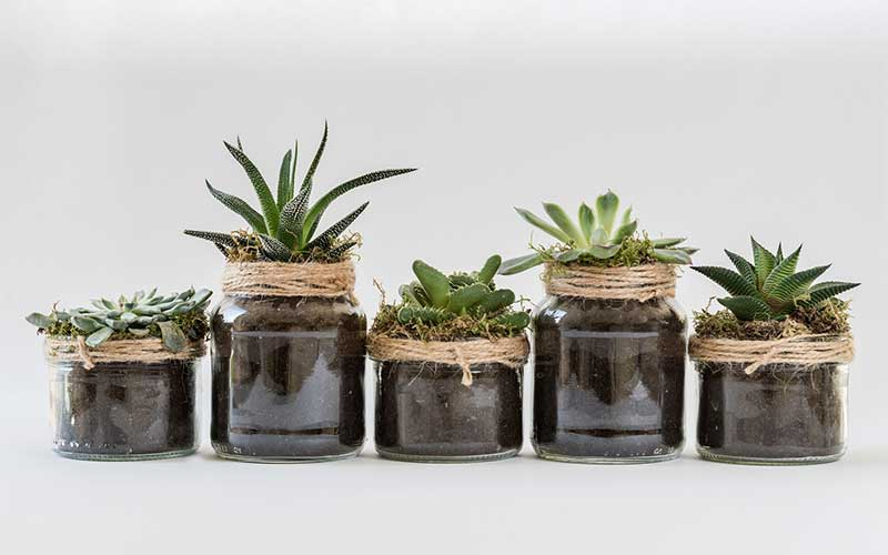 What Makes Succulents Special