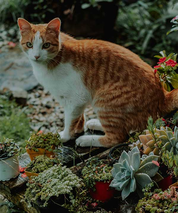 What to Do if Your Cat Accidentally Ingested a Toxic Succulent