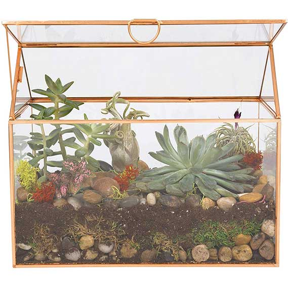 Deco Glass Terrarium, Succulent, Air Plant