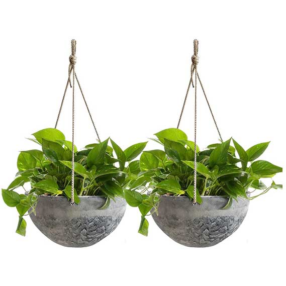 Hanging Planter Flower Plant Pots