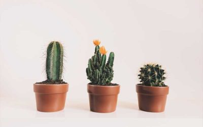 How Often Do You Water A Cactus?