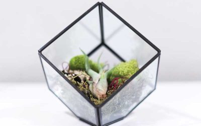 Learn How to Care for Bulbosa Air Plant