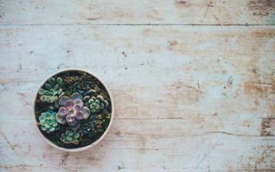 Rare Succulents That You Need To Know About
