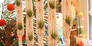 How to Grow and Care for Ionantha Fuego